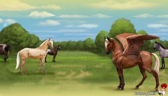 Cavalli Howrse